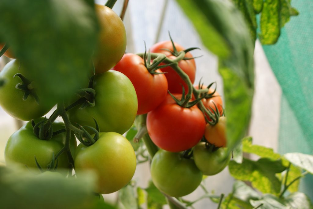 مقایسه عملکرد محصولات کشاورزی