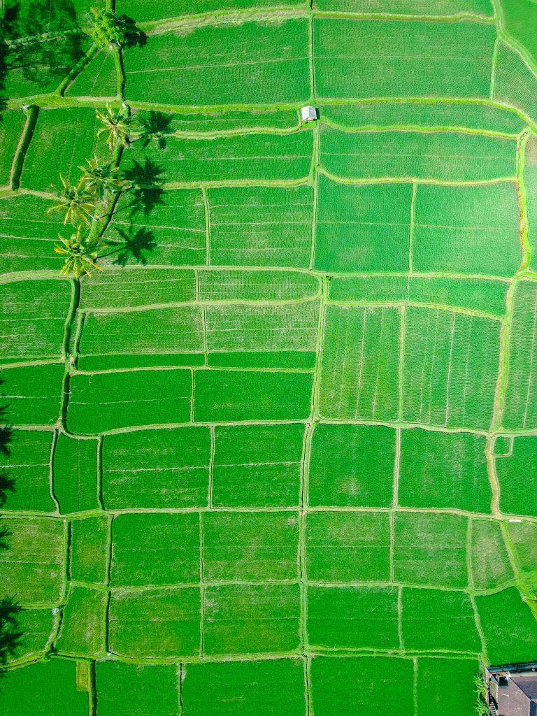 سنجش از دور محصولات کشاورزی