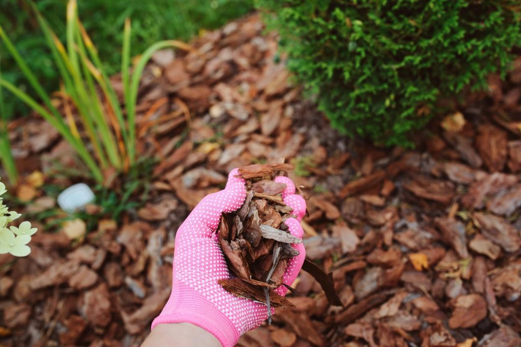 مالچ پاشی گیاهان برای جلوگیری از سرمازدگی