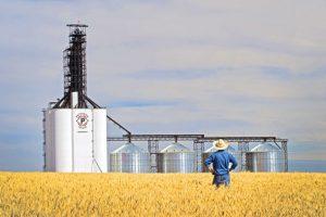 کشاورزی به عنولن یک تجارت