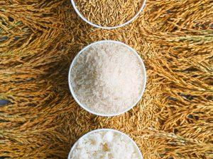 بذر مناسب کاشت برنج