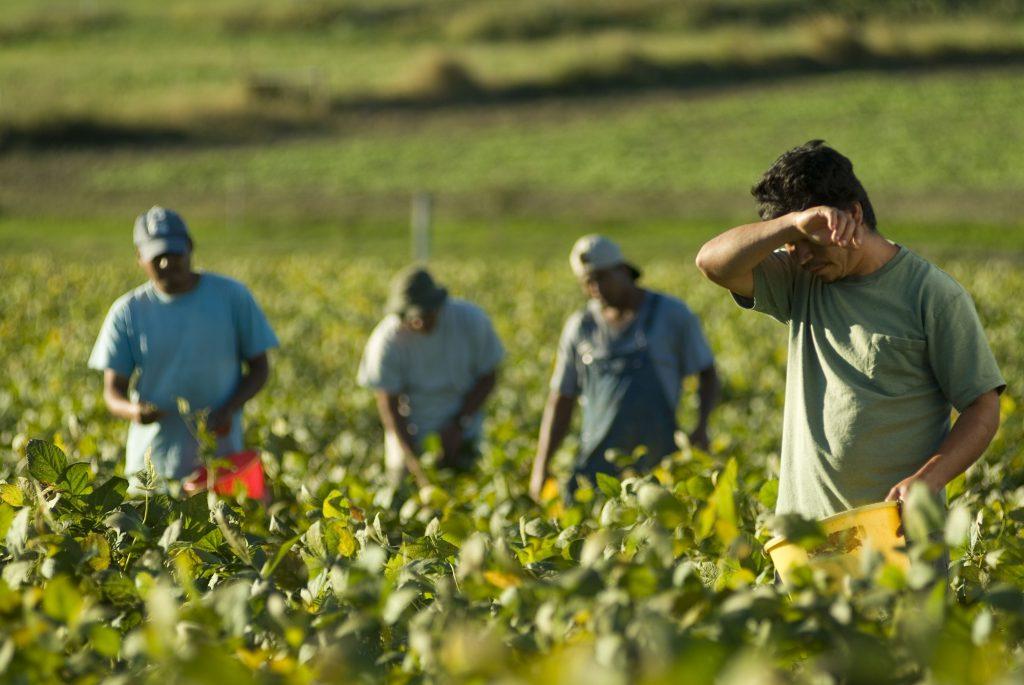 نقش صنعت کشاورزی در اشتغال زایی و کاهش فقر
