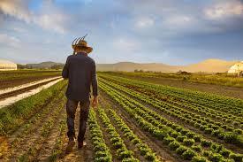 کشاورزی گسترده