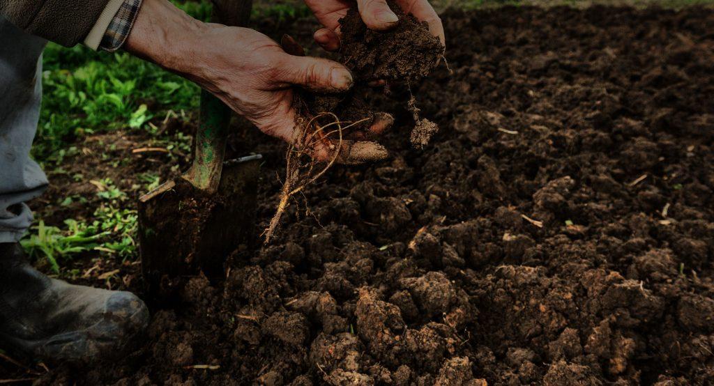 خاک مناسب برای گیاه