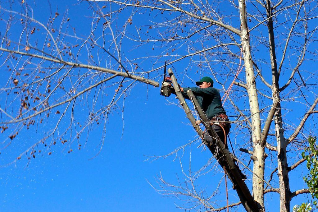حفظ ایمنی درختان