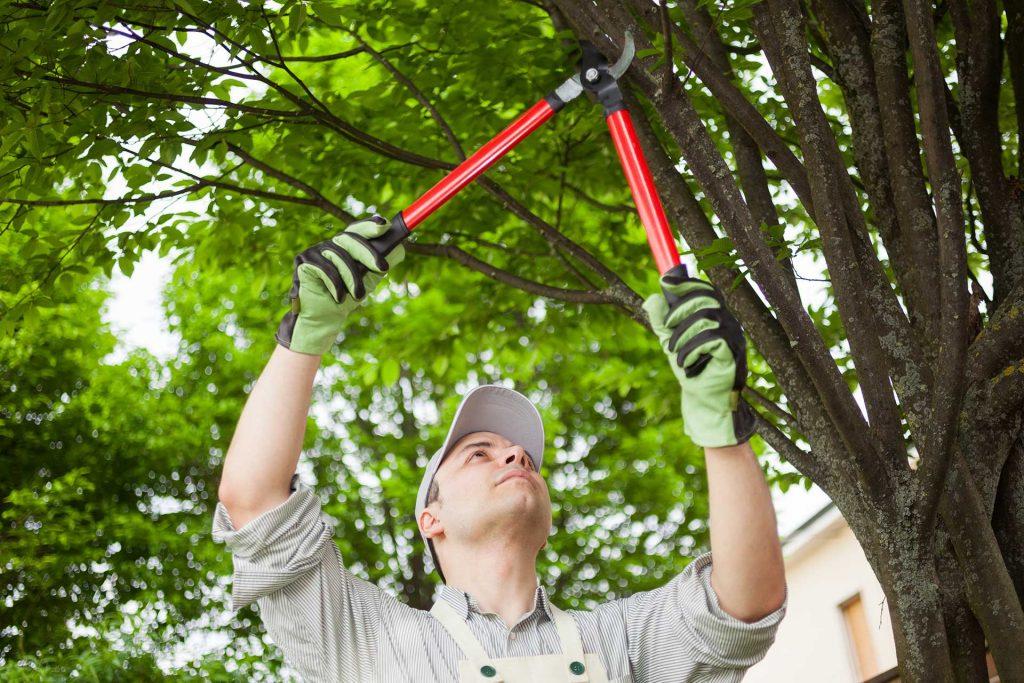 افزایش سلامت درختان