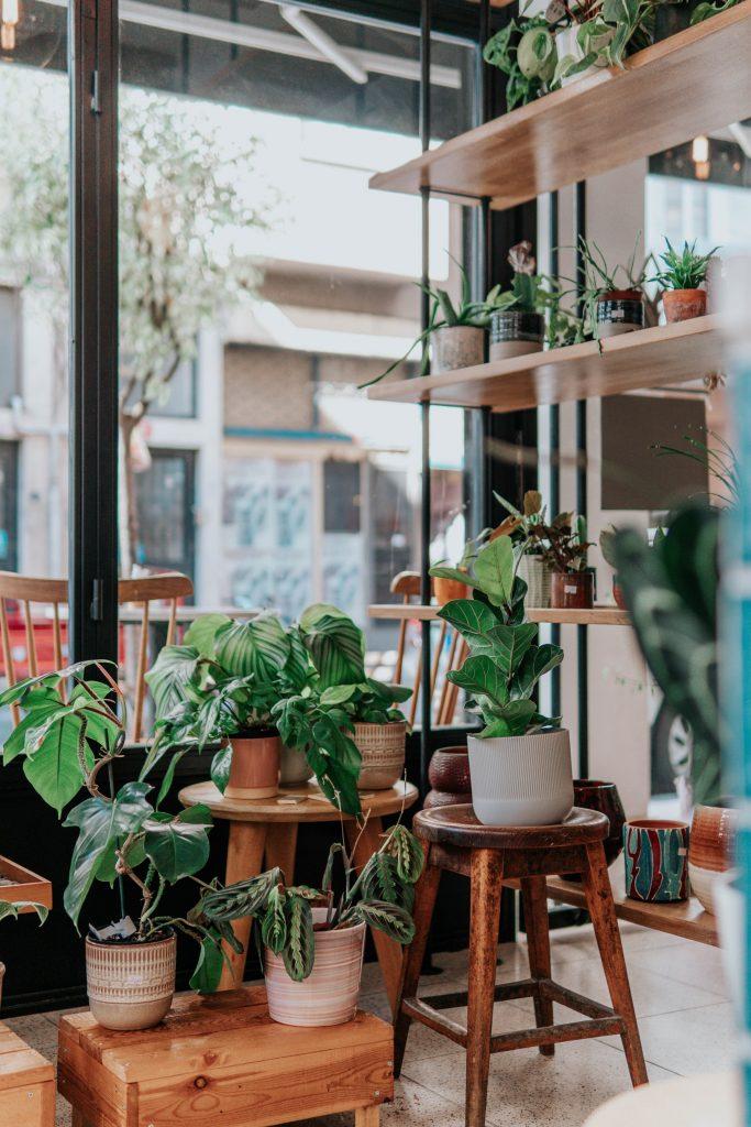 کوودهی گیاهان آپارتمانی