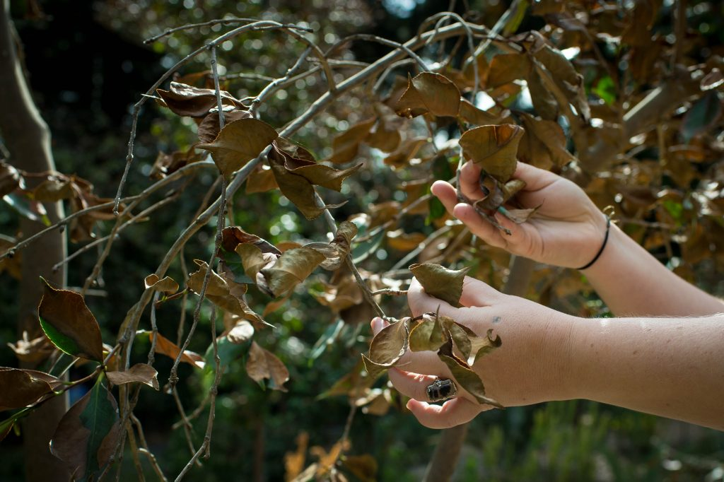 تنش گرمایی گیاهان