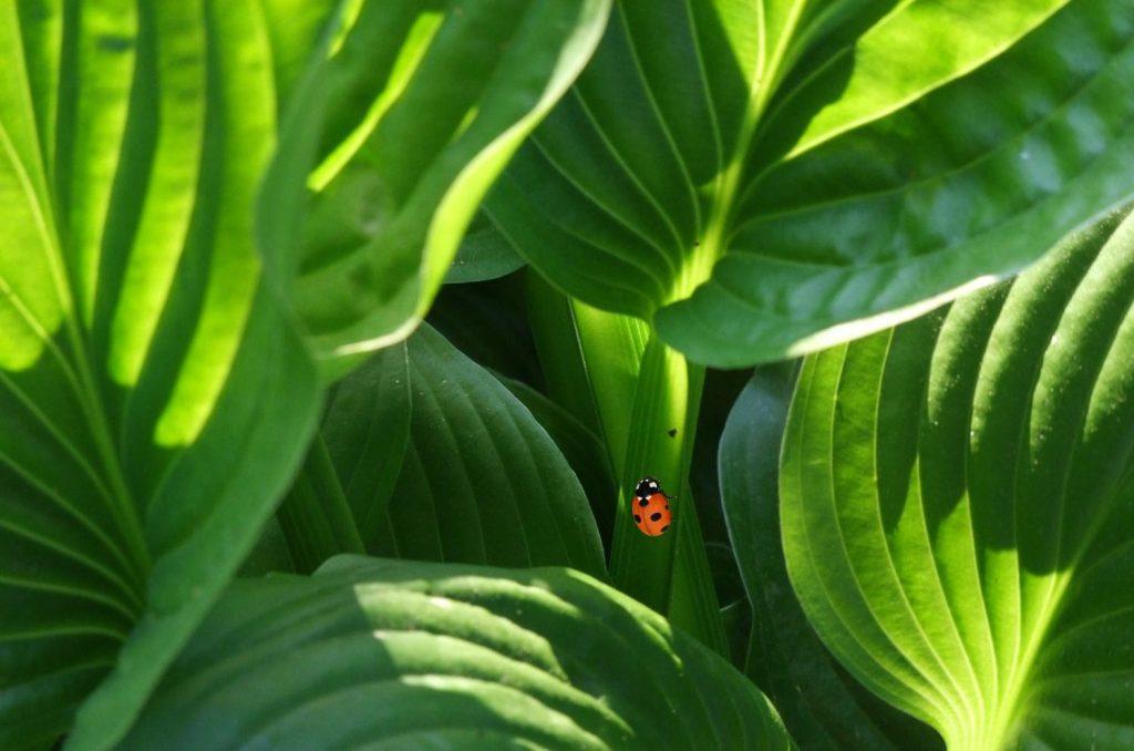 گرمازدگی گیاهان