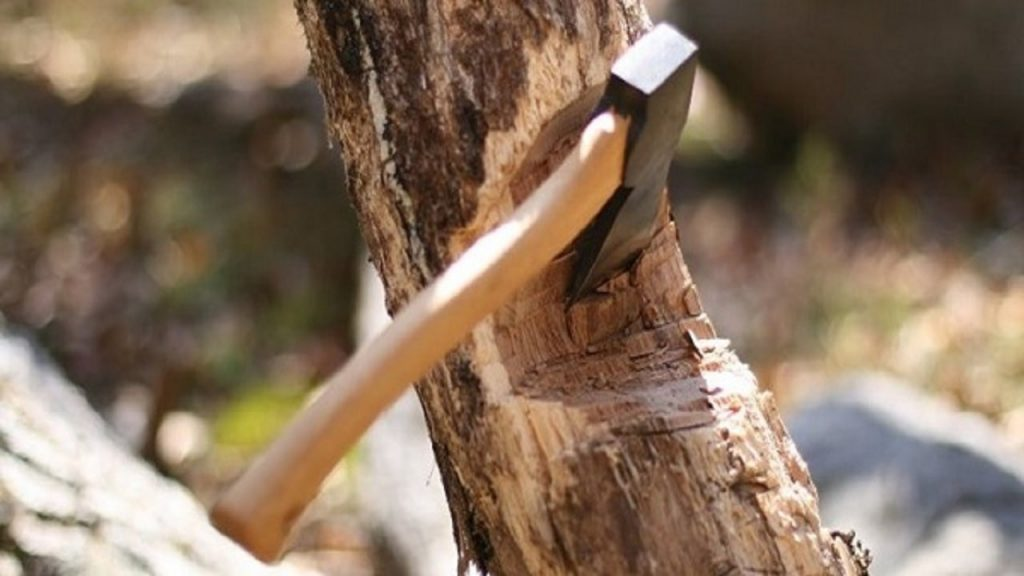 مبارزه با خشکی درختان به چه صورت است