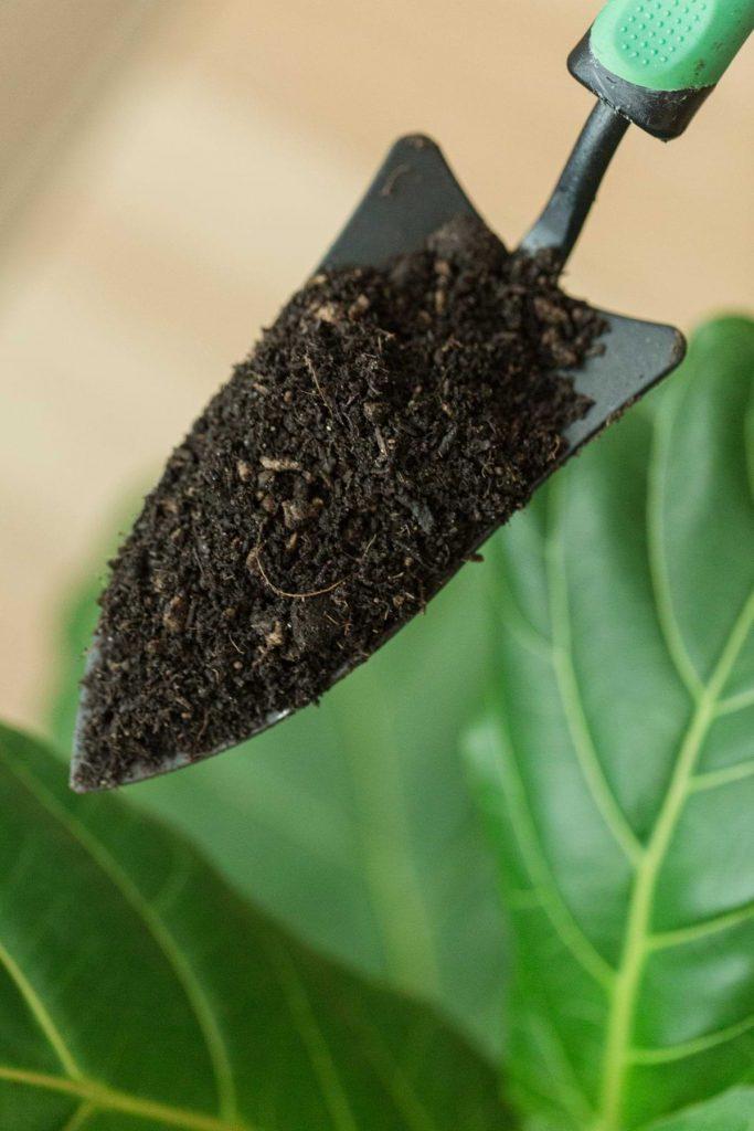 انواع خاک گیاهان آپارتمانی