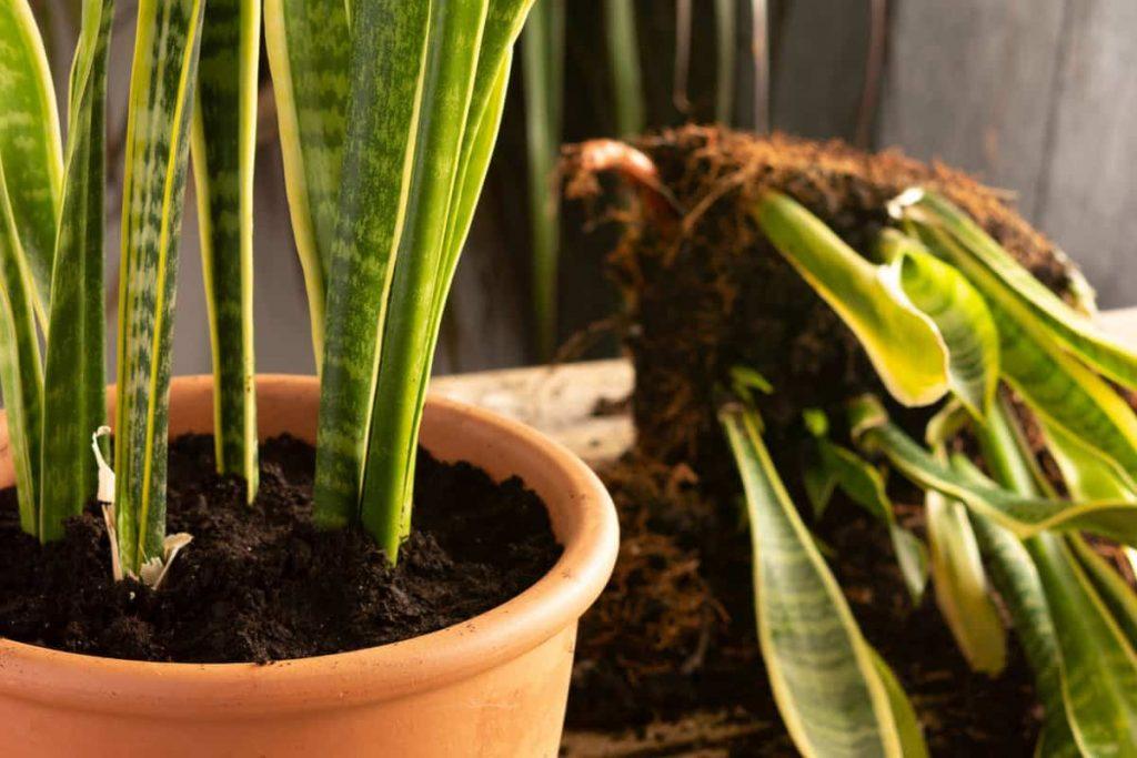 به خاک گلدان هایتان اهمیت دهید