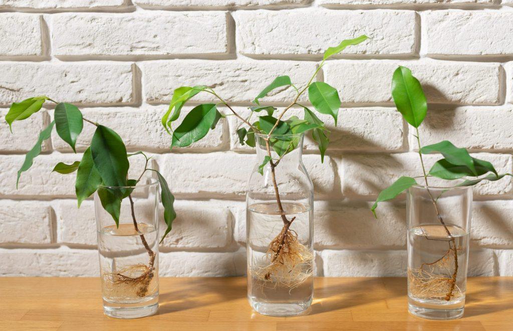 تکثیر گیاهان آپارتمانی به چه صورت است؟