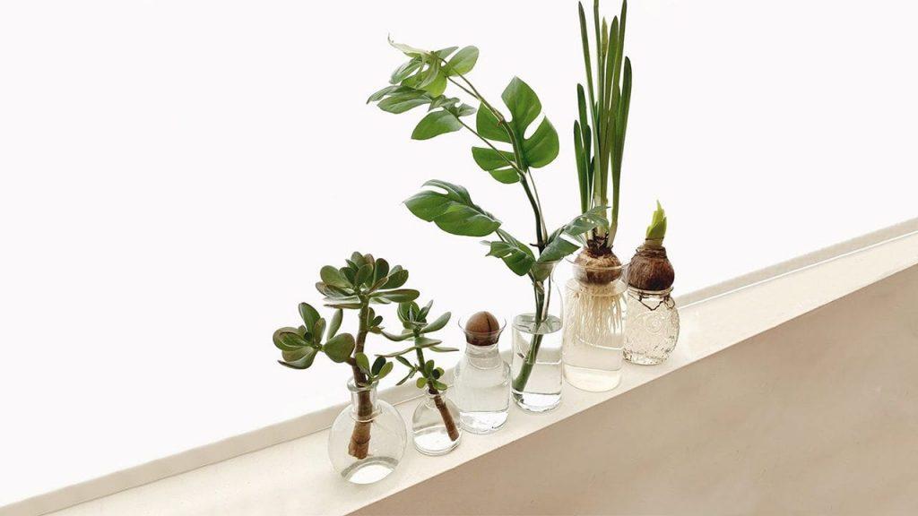 گیاهان خانگی مان را تکثیر کنیم