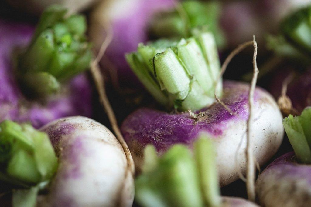 گیاه شلغم